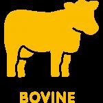 bovine collagen